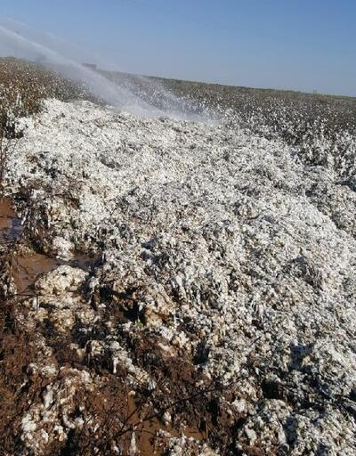 Alev alan biçerde 5 ton pamuk kül oldu
