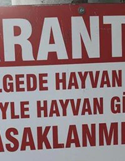 Konya'da veba karantinası: Küçükbaş hayvan giriş ve çıkışı kapatıldı