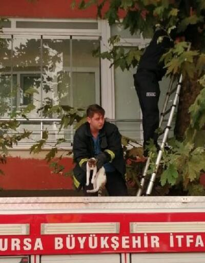 Ağaçta mahsur kalan kediyi, itfaiye kurtardı