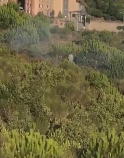 Pendik'deki orman yangınıyla ilgili yeni gelişme