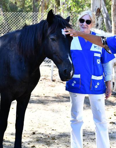 Faytonların kaldırılmasıyla atlar yaşam parkında yaşayacak