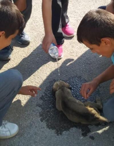 Yavru köpeğin imdadına öğrenciler yetişti
