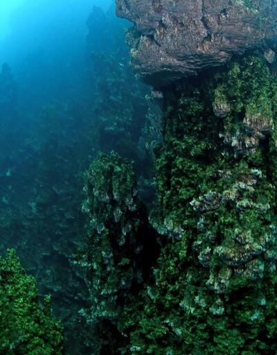 Van Gölü'nde keşfedildi: Dünyanın en büyük mikrobiyaliti