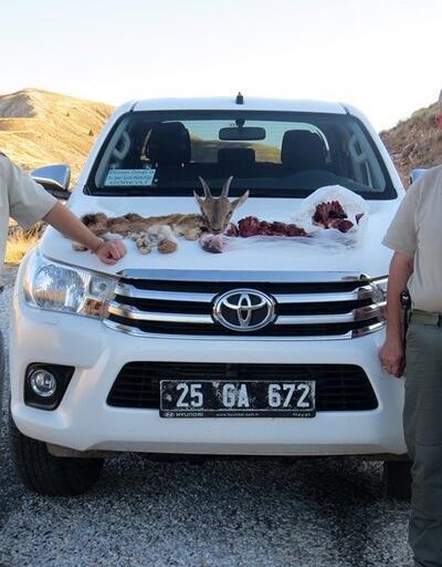 Yaban keçisi avlayana 23 bin lira ceza