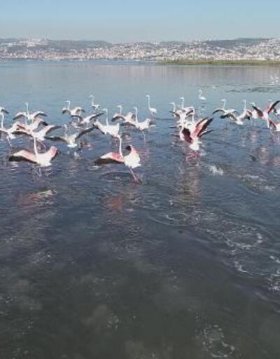 İzmit Körfezi, flamingolarla renklendi
