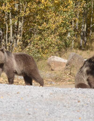 Yavru ayılar piknikçilerin maskotu oldu