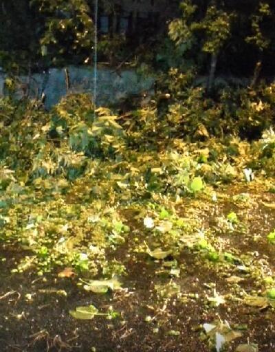 İstanbul'da fırtına: Ağaçlar devrildi, çatılar uçtu