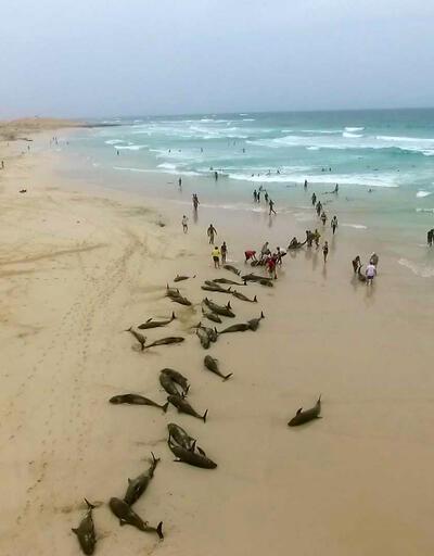 Korkutan görüntü... Yüzlerce yunus kıyıya vurdu