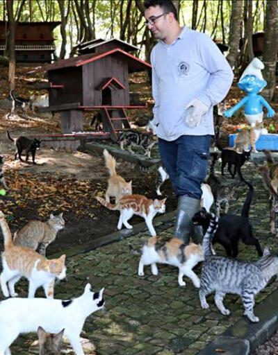 Kediler için özel kasaba