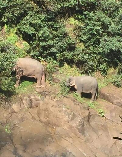 Şelale havuzuna düşen 6 fil öldü