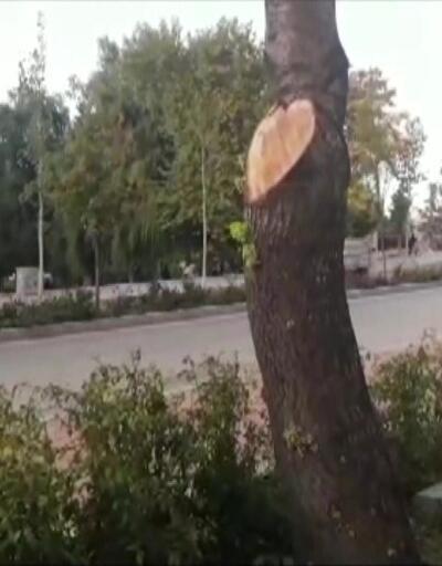 Ağaç kesmeye 50 bin TL ceza
