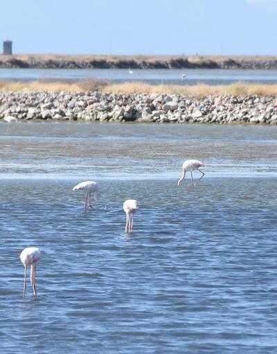 300'e yakın kuş türünü saatlerce izlediler