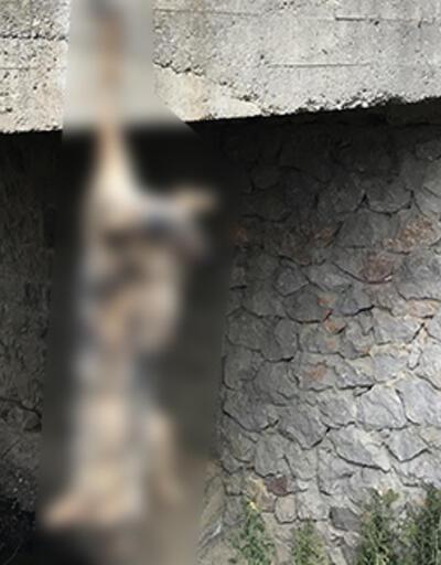 Yer: Bayburt... Köprü korkuluklarına asılı kurt ölüsü bulundu
