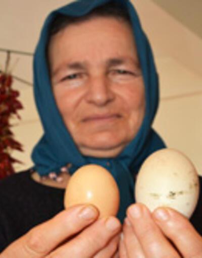 Dev yumurta şaşırttı