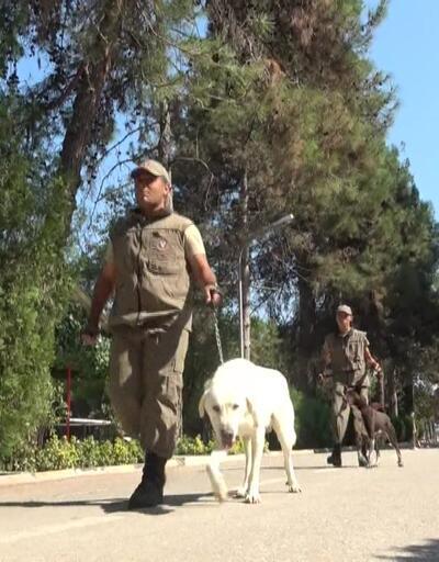 Canlı kurtarma köpeği Zerdava