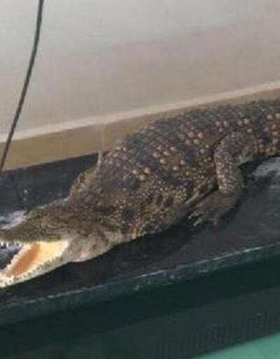 Sosyal medyada timsah, piton yılanı ve jako papağan satan şüpheli yakalandı