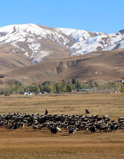 Van'da yarı fiyatına Afgan çoban istihdamı