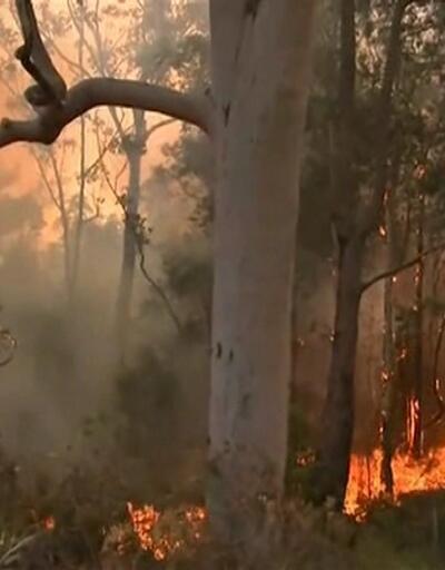 Ülkenin doğusunda 90'a yakın yangın çıktı