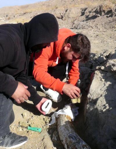 Balık tutmaya gelen kişi ihbar etti! Kayseri'de 7,5 milyon yıllık yeni fosil bulundu