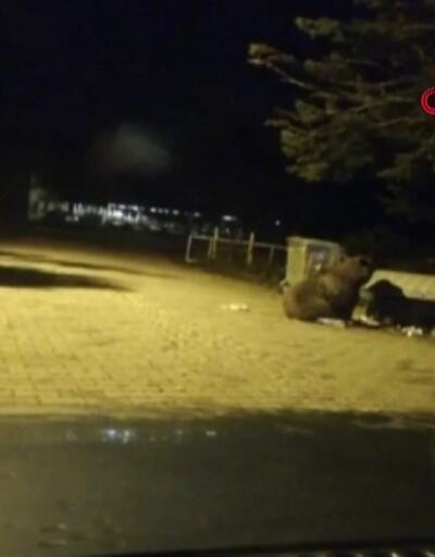 Ayı saldırısına uğrayan çobanı köpekler kurtardı