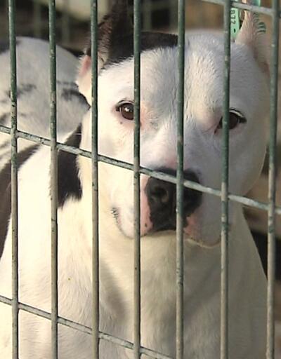 Hayvan hakları yasası yeni yılda Meclis'e geliyor