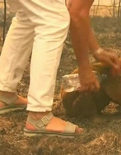 Koalayı alevlerden kurtarmıştı, hastanede ziyaret etti