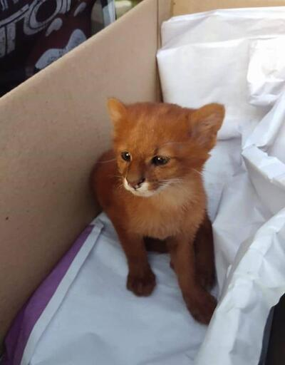 2 ay evinde besledi! Kedi yavrusu sandı meğer...