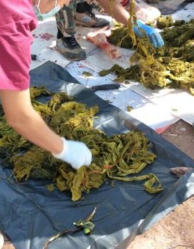 Geyiğin midesinden 7 kilo plastik çöp çıktı