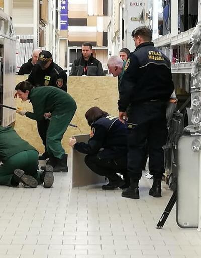 Hasta tilki, alışveriş merkezine girdi