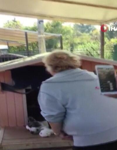 Barınakta 20 köpek ölüsü buldular!