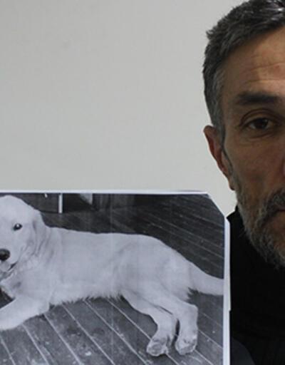 Bursa'da kaybolan köpeğini Amerika'da buldu