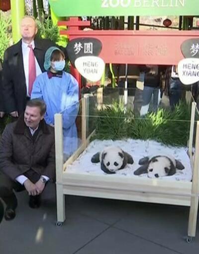 Almanya'nın ikiz pandaları 100 günlük oldu