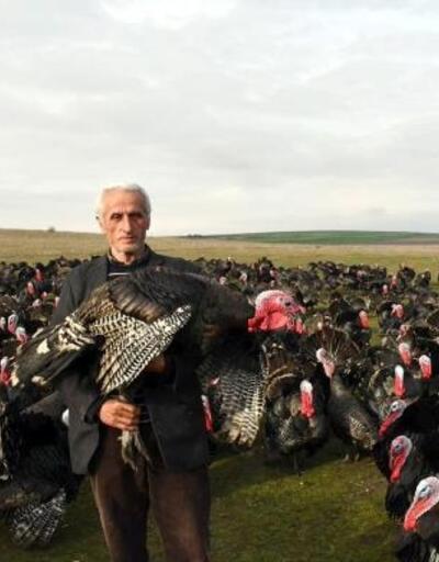 Yılbaşı öncesi 4 bin hindi satan besici: İyi hindi kanatlarının altından anlaşılır