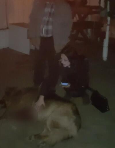Öldürülmüş köpeğini gören kadın sinir krizi geçirdi