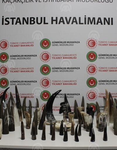 İstanbul Havalimanı'nda 77 kaçakbufaloboynuzu ele geçirildi