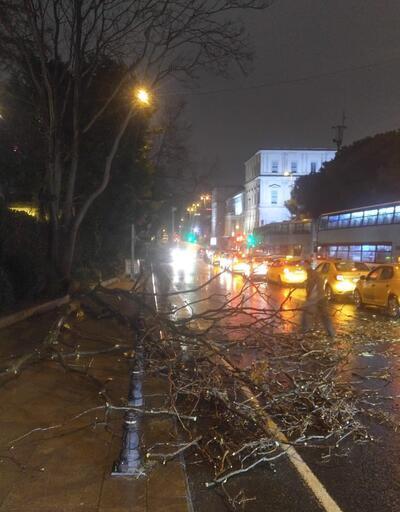 İstanbul'da fırtına ağaçları devirdi