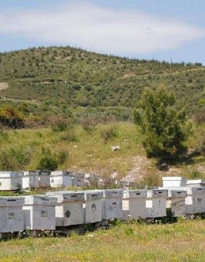İzmir'in 16'ncı bal ormanı, Urla'da kurulacak
