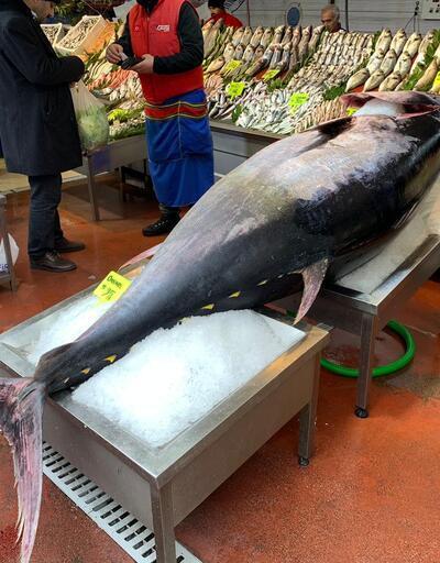 325 kiloluk balık görenleri hayrete düşürdü