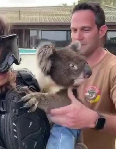 Muhabire koala şakası