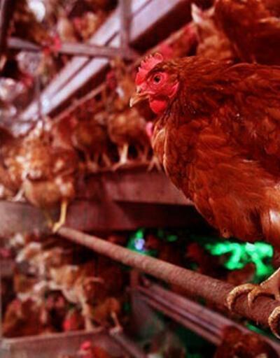 100 binden fazla hayvan itlaf edildi! 6 ülke ithalatı durdurdu