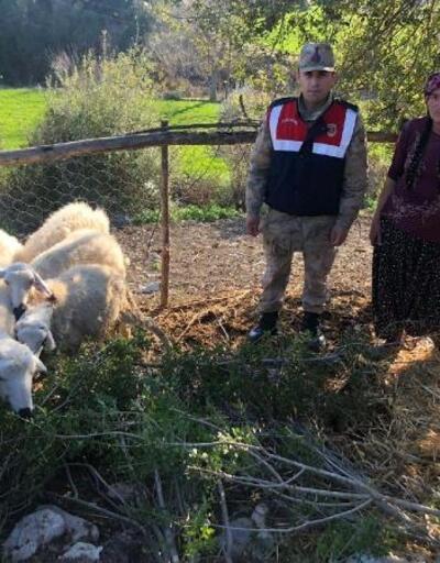 Çalınan küçükbaş hayvanlar, bulunarak sahibine teslim edildi