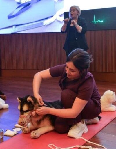 'Hayvanlarda İlk Yardım Eğitimi'nin 2'ncisi düzenleniyor