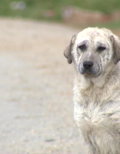 Sokak hayvanları Silivri ve Çatalca'ya bırakılıyor