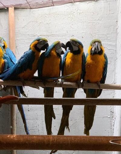 İzinsiz papağan satanlara operasyon
