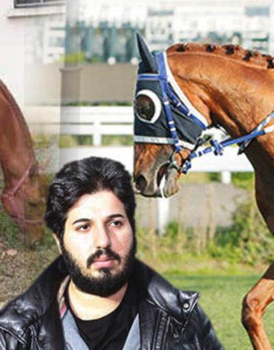 Kividen, muzdan kuru samana... Reza Zarrab'ın atı 'Dayım benim' şimdi bu halde!