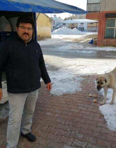 Kamyonetten ekmek alan sevimli köpek, kameraya yakalandı