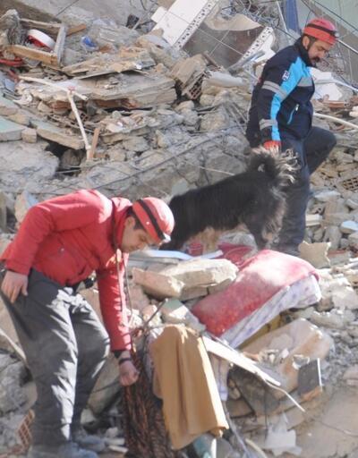 Sokakta bulunup eğitilen köpekler hayat kurtardı