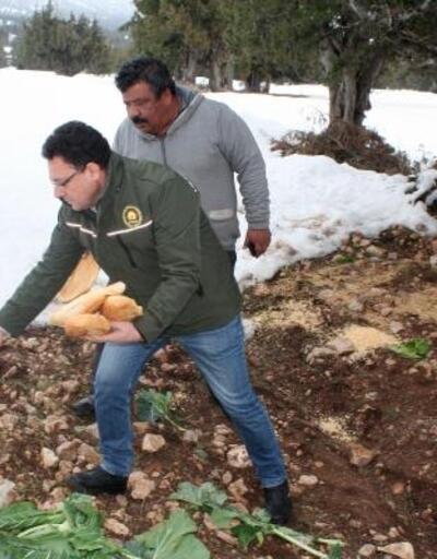 Erdemli'de yaban hayvanlarına 400 kilo yiyecek bırakıldı