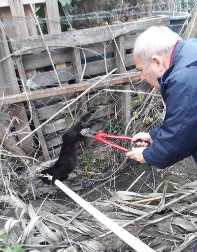Tellere takılan kediyi itfaiye kurtardı