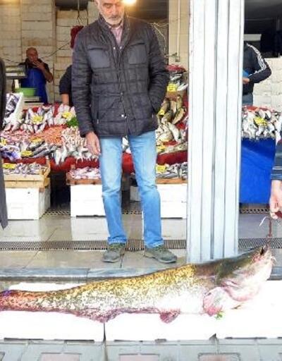 Dev yayın balığı, kilosu 30 liradan satıldı